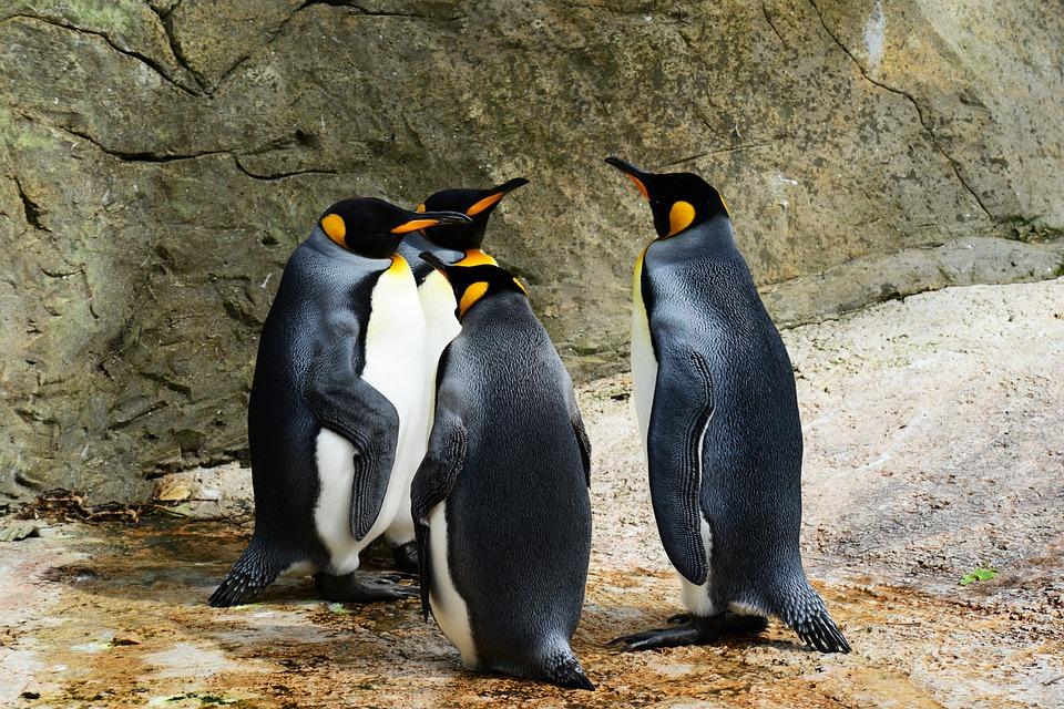 Ohrožené druhy zvířat – které ničí globální oteplování? 2